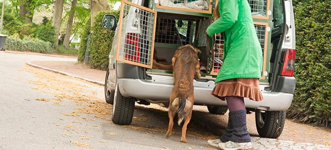 Transport der Hunde im speziell hierfür ausgebauten Wagen